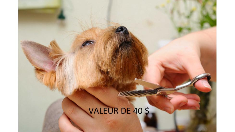 40 $ sur un forfait SPA DÉTENTE AU BLEUET pour chien