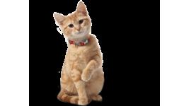 Forfaits toilettage pour chats